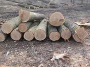 Продажа дров круглого леса (в ящиках,  сетках).